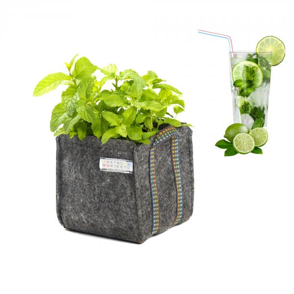 Mojito Planter